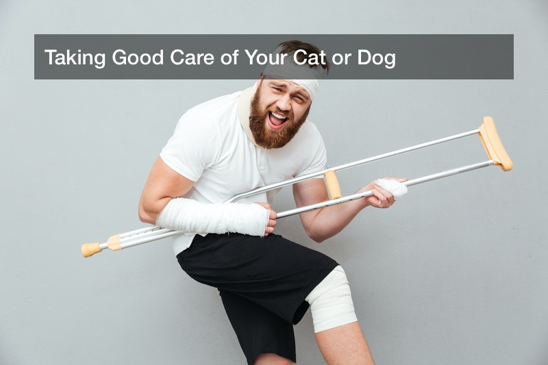 Taking Good Care of Your Cat or Dog