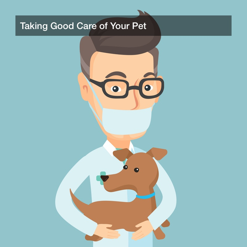 Taking Good Care of Your Pet