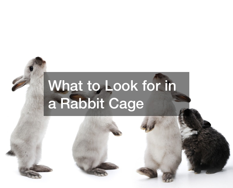 What to Look for in a Rabbit Cage